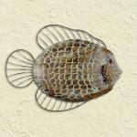 Flat Fish Wall Art